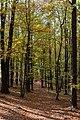 Unterlamm Herbstwald 20181026 02.jpg