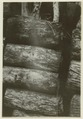 Utgrävningar i Teotihuacan (1932) - SMVK - 0307.g.0110.tif