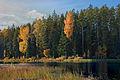 Värviküllane Võrumaa järve kallas.jpg