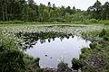 Ven in het Mensingerbos (2).jpg