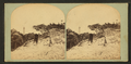 View of the lighthouse on Anastasia Island, St. Augustine, Fla, from Robert N. Dennis collection of stereoscopic views.png