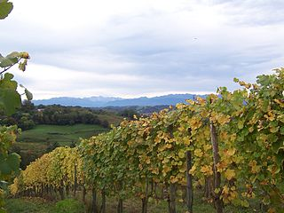 French wine region