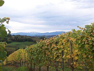 South West France (wine region) - Image: Vignoble du jurançon 3