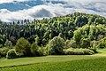 Villach Federaun Federauner Strasse Mischwald Nord-Ansicht 10052017 8345.jpg