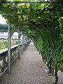 Villandry - château, jardins (09).jpg