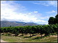 Vineyard in Argentina wine region of Cafayate.jpg
