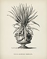 Vintage illustrations by Benjamin Fawcett for Shirley Hibberd digitally enhanced by rawpixel 66.jpg