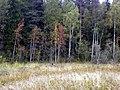 Vozhegodskiy r-n, Vologodskaya oblast' Russia - panoramio - Сергей Зубов (52).jpg
