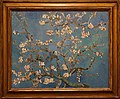 WLANL - MicheleLovesArt - Van Gogh Museum - Almond Blossom 1890.jpg