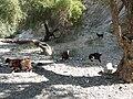 Wadi Bani Awf (3).jpg