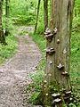 Wanderweg - panoramio (5).jpg