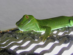 240px wellington green gecko 04