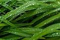 Wet Garden Leaves Macro PLT-LV-4.jpg