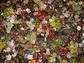 Wet leaves at Island Cottage Woods (1394329282).jpg