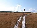 Wetlands Tasiro, Minamiaizu town, Fukushima Prefecture.jpg