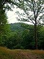 Whites woods view 3.jpg