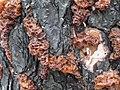 WildFireAreaNHorken0809-fungus.JPG