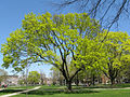 Withrow Park 11.jpg