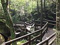 Wooden bridge in the forest.jpg