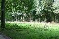 Woodland clearing - geograph.org.uk - 987458.jpg
