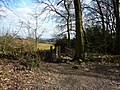 Woodland edge - geograph.org.uk - 1756222.jpg