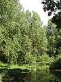 Woodland in Denham Country Park - geograph.org.uk - 20114.jpg