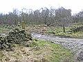 Woodland near Salter's Gate - geograph.org.uk - 357616.jpg