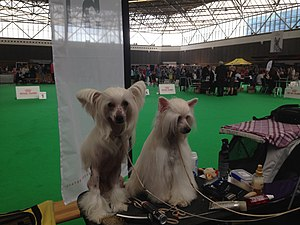World Dog Show, Amsterdam, 2018 - 29.JPG