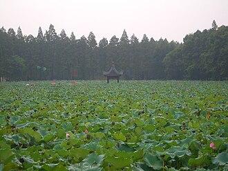 East Lake (Wuhan) - Image: Wuhan Donghu lotuses 4155