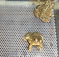 Wyoming Toads (5348169472).jpg