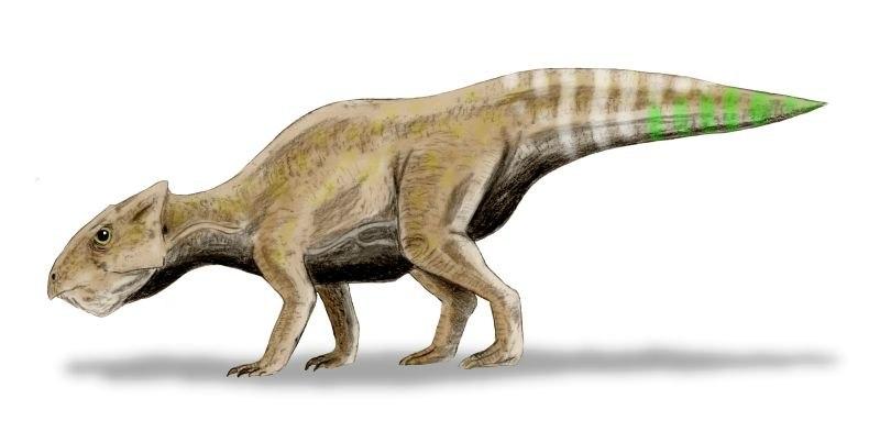 Yamaceratops BW