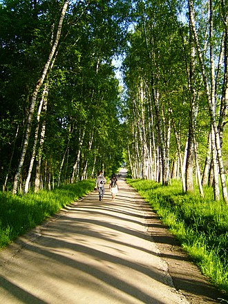 Yasnaya Polyana - An avenue of birch trees leads from the gate at Yasnaya Polyana to Tolstoy's house.