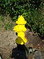 Yellow Fire Hydrant.jpg