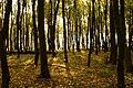 Zdolbunivs'kyi district, Rivnens'ka oblast, Ukraine - panoramio - любком (16).jpg