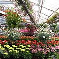 Zierpflanzen.jpg