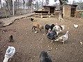 Zoo des 3 vallées - Animaux - 2015-01-02 - i3355.jpg
