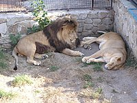 Zoo in Yalta 012.jpg