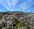 (((دره آشان مراغه در بهار ))) - panoramio.jpg