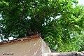(((شهمیرزاد و درختهای گردو ))) - panoramio (2).jpg