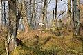 Łupków (Лупків) - old greek catholic cemetery (2).JPG