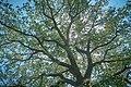 Андріївський ліс 12.jpg