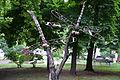 Бабки на дереві.jpg