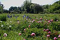 Ботанический сад луг.jpg