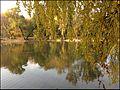 Ботанический сад - panoramio (17).jpg