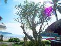 Вид на пляж(Исм.Альберт) - panoramio.jpg