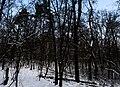 Голосіївський ліс DSC 0114.jpg