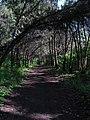 Дендрологічний парк, Довгинцівський район 13.JPG