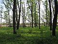 Дендрологічний парк 184.jpg