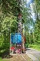 Дерево поврежденное самолетом Гагарина и Серегина.jpg
