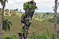 Доминиканская Республика - panoramio (48).jpg